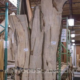 Banyan (Cuban Laurel) slab