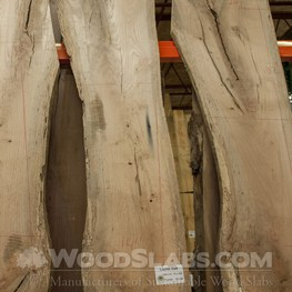 laurel oak wood slab