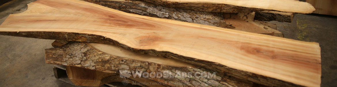 camphor wood slabs