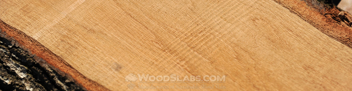 laurel oak wood slabs