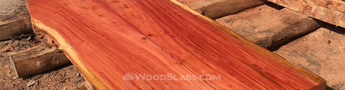 eucalyptus wood slabs