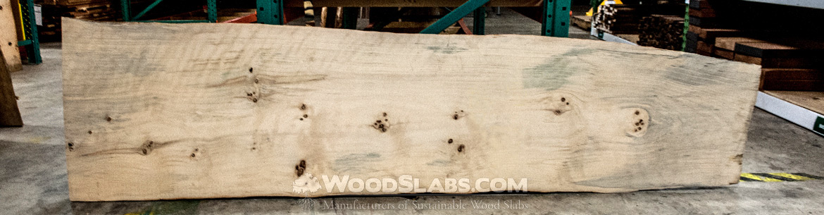Norfolk Island Pine wood slabs